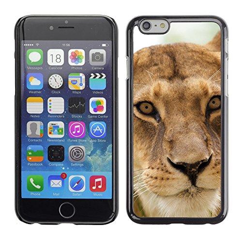 "Premio Sottile Slim Cassa Custodia Case Cover Shell // V00003588 lionne // Apple iPhone 6 6S 6G PLUS 5.5"""
