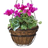 Cheap CobraCo HPI14-BZ 12-Inch Bronze Scroll Braided Hanging Basket