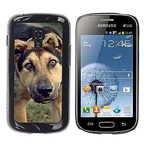 TopCaseStore / la caja del caucho duro de la cubierta de protección de la piel - Mutt Wolfhound Shorthair Mongrel Dog - Samsung Galaxy S Duos S7562