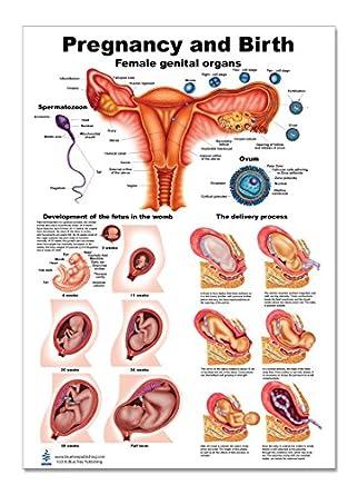 Anatomy Test During Pregnancy