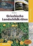 Griechische Landschildkröten: Pflege und Zucht