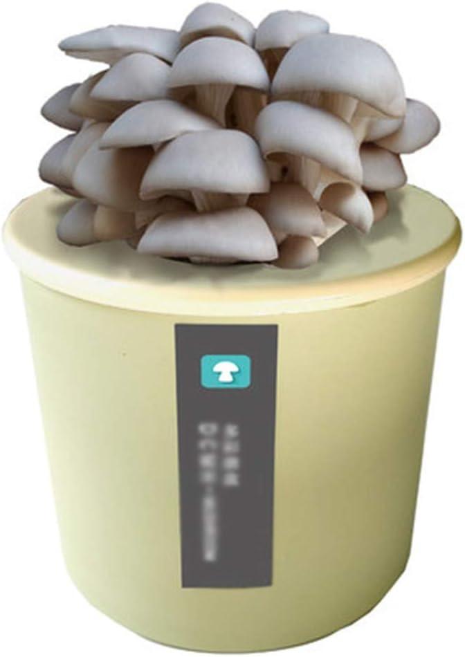DRSM Grow Your Own Fresh Mushroom Kit, Oyster Mushrooms Growing Kit Interior para niños/Principiantes, Mini Oyster Mushroom Esporas Mycelium Spawn Bonsai, aproxima