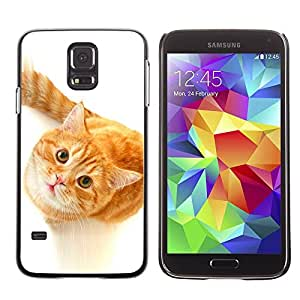 Paccase / SLIM PC / Aliminium Casa Carcasa Funda Case Cover para - Cute Curious Orange Cat - Samsung Galaxy S5 SM-G900