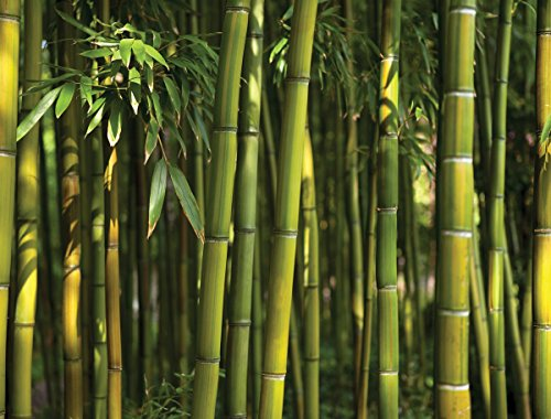 Cheap  JP London PMURLT2012 Prepasted Removable Wall Mural Bamboo Forest Green, 4' x..