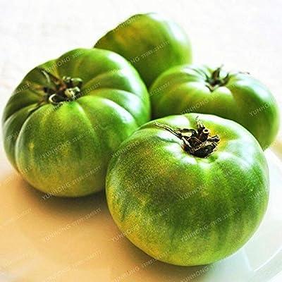 Bonsai Vegetal - Bonsai Extra Large Organic Food Vegetables Easy Growing Pot Plant 100 Pcs : Garden & Outdoor