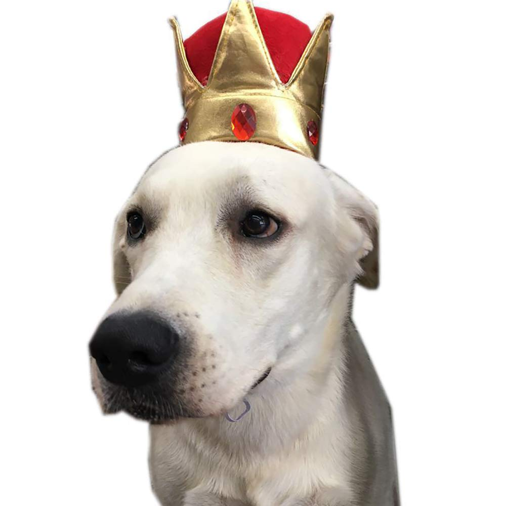 Amazon.com: QNMM - Gorro para mascotas de cumpleaños, gato ...