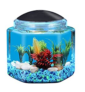 Api betta kit hex fish tank 1 gallon pet for Betta fish tanks amazon