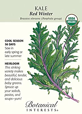Botanical Interests, Seed Kale Red Winter Organic