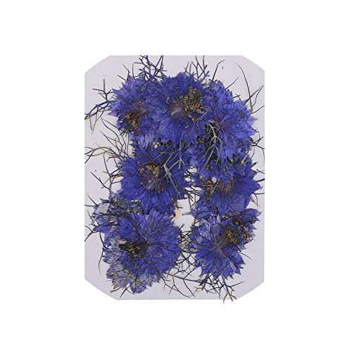 - 12Pcs Love in A Mist Natural Pressed Real Dried Flower for Craft DIY Resin Ornaments,Blue