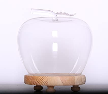 Amazon Clear Small Cute Glass Dome Cloche Bell Jar Display Case