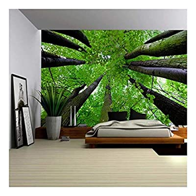 Gazing Up Into a Leafy Covered Forest - Wall Mural, Removable Sticker, Home Decor - 100x144 inches