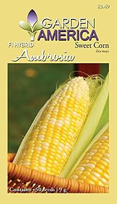 Garden America ZEA-1579 Ambrosia F1 Sweet Corn Seed