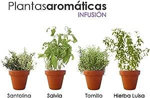 PACK PLANTAS AROMÁTICAS NATURALES INFUSIÓN. 1 SALVIA, 1 SANTOLINA ...