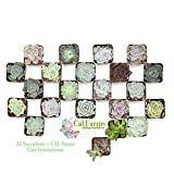 CAL Farms 2'' Beautiful Assorted Variety Succulents Weddings or Party Favors or Succulent Gardens (22 Count)