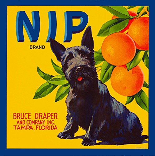 - A SLICE IN TIME Tampa Florida Nip Scottish Terrier Puppy Dog Orange Citrus Fruit Crate Label Art Print