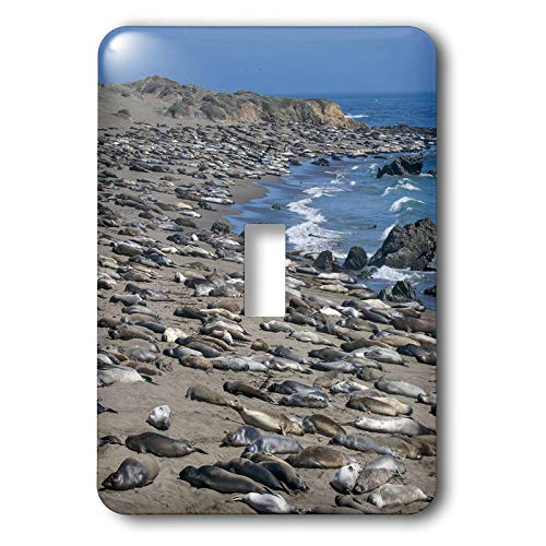 3dRose Danita Delimont - Seals - Elephant Seals on Beach, San Simeon, California - 2 plug outlet cover ()