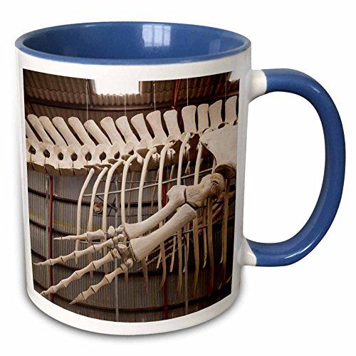 3dRose Danita Delimont - Australia - Australia, former Whaling Station, whale skeleton - 15oz Two-Tone Blue Mug (mug_226367_11)