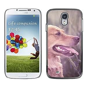 VORTEX ACCESSORY Hard Protective Case Skin Cover - labrador retriever field brown longhair dog - Samsung Galaxy S4 I9500