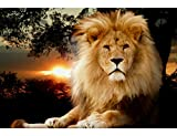 pics of lion - Fipart DIY diamond painting cross stitch craft kit. Wall stickers for living room decoration.lion(12X16inch/30X40CM)
