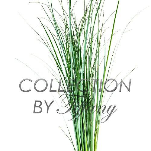 Bear Grass - Fresh Bear Grass for Vase Filler Green Arrangement Bouquet