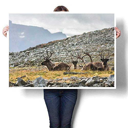 Anyangeight Wall hangings Tromso Raindeers Decorative Fine Art Canvas Print Poster K 48
