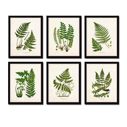 Vintage Ferns Botanical Print Set No.26 Set of 6 Giclee Fine Art Prints - Unframed