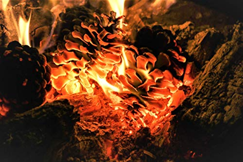 (Raw Earth Colors Natural Fire Starter Pinecones for Fireplace, Wood Stove, Fire Pit, Campfire - Organic, Eco)