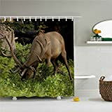 starlight-Bracele Bathroom curtains, reindeer grazing on green grass, green,waterproof, mildew proof, machine washable, environment-friendly material, odorless 60x72 inch
