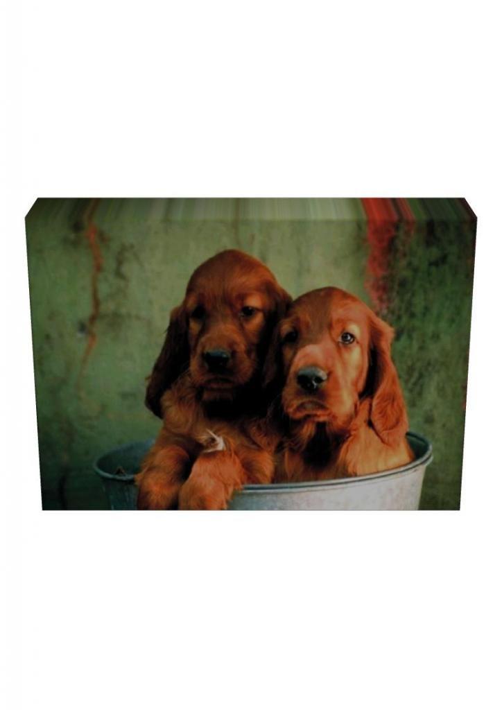 Irish Setter Dog Leinwand Print 38 mm Box Rahmen 1060–139, schwarz ...