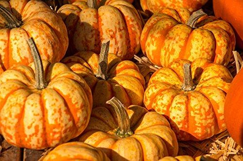 Home Comforts Peel-n-Stick Poster of Harvest Festival Autumn Pumpkin Halloween Orange Poster 24x16 Adhesive Sticker Poster -