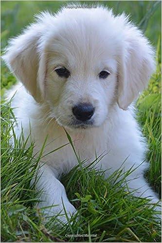 Buy Super Cute Golden Retriever Puppy Dog Lined Journal Book Online