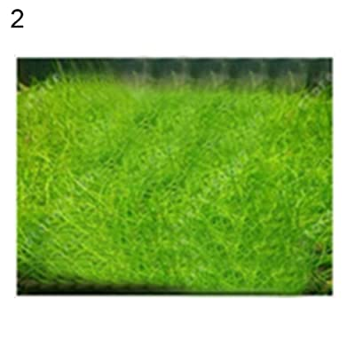 wpOP59NE 100Pcs Aquarium Water Grass Seeds Fish Tank Aquatic Plant Bonsai Landscape Decor - 100pcs Mini Hairy Seeds Plant Seeds : Garden & Outdoor