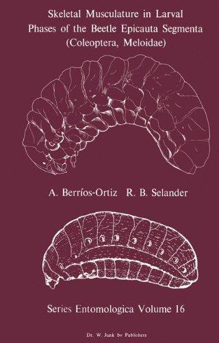 Skeletal Musculature in Larval Phases of the Beetle Epicauta Segmenta (Coleoptera, Meloidae) (Series Entomologica)