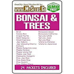 Bonsai & Trees Seeds COMBO KIT - from Birch to Wisteria Japanese Seeds - By MySeeds.Co (Bonsai & Trees Kit)
