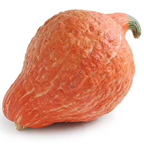 Golden Hubbard Winter Squash Seeds, 25+ Premium Heirloom Seeds, Cucurbita Pepo, Beautiful & Delicious Gourd Squash!, (Isla's Garden Seeds), 85% Germination Rates, Non GMO, Highest Quality