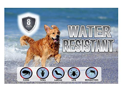 Yancott for Dogs - 8 - Toxic - - Adjustable Size - - Hypoallergenic - Collar