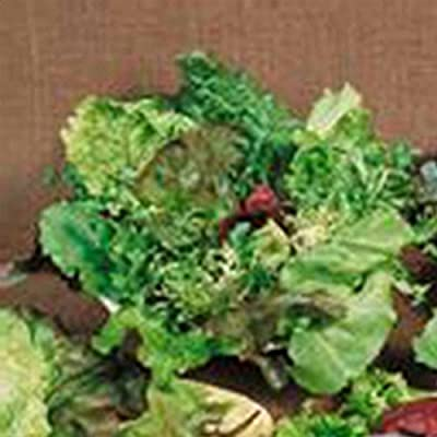Mixed Lettuce Greens Garden Seeds - Mesclun Mixture - Non-GMO, Heirloom Vegetable Gardening & Microgreens Mix