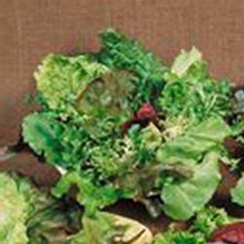 Mixed Lettuce Greens Garden Seeds - Mesclun Mixture - 1 Oz - Non-GMO, Heirloom Vegetable Gardening & Microgreens Mix