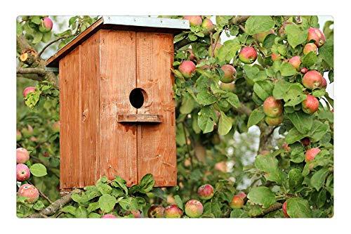Indoor Floor Rug/Mat (23.6 x 15.7 Inch) - Birdhouse Cottage Apple Tree Jack Birds Protection (Apple Jack Rug)
