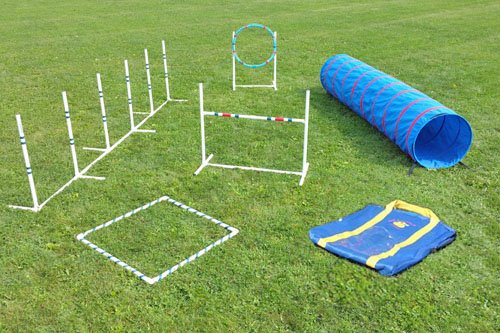 Dog Agility Course - 6