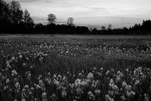 青い野生の花の壁紙-花の壁紙-#16262 - 白黒の キャンバス ステッカー 印刷 壁紙ポスター はがせるシール式 写真 特大 絵画 壁飾り50cmx33cm