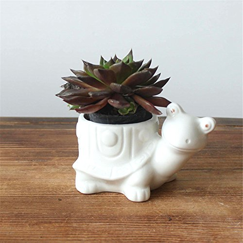 - Turtle White Ceramic Succulents, White Animal Plant Potted, Window Sill Box, Cactus Flower Container, Tabletop Decoration