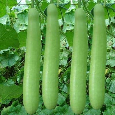Bottle Gourd imp. g-2 Seeds (avg 50-100) Seeds 1 : Garden & Outdoor