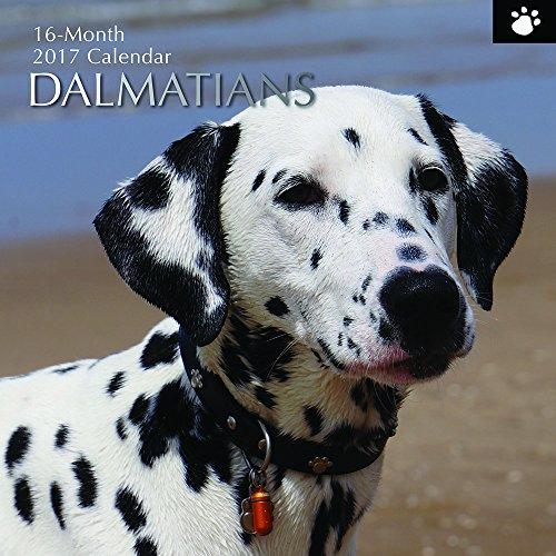 "Dalmatians 16 Month Wall Calendar 2017 - Dog Breed Calendars - Multicolor - 12"" x 12"""