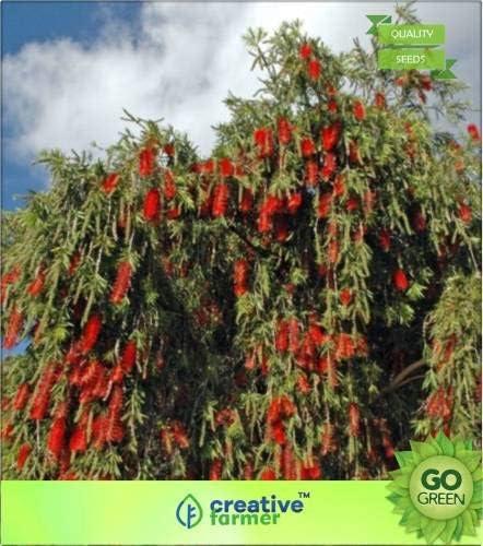 Seedsown Botella Cepillo arbustos de los árboles de semilla: Amazon.es: Jardín
