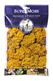 SuperMoss (25125) Reindeer Moss Preserved, Mango, 2oz