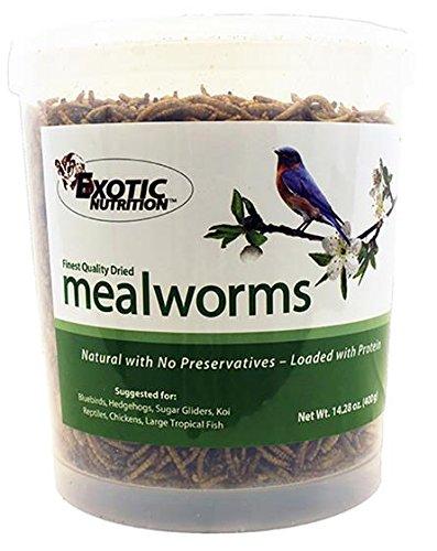 Mealworm Tub - 4