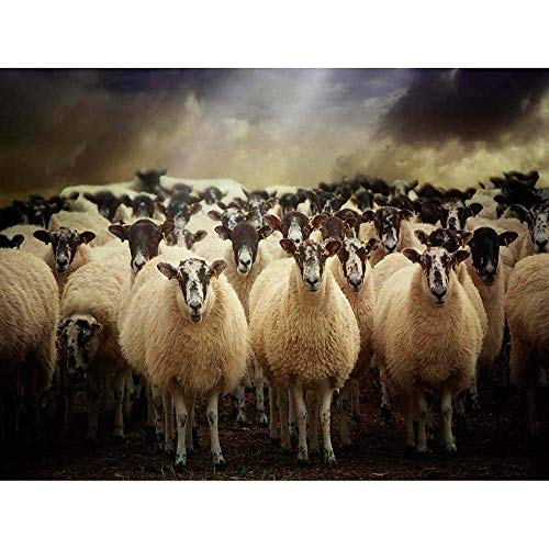 Wee Blue Coo Sheep Flock Farm Animal Unframed Wall Art Print Poster Home Decor - Breeds Sheep Poster