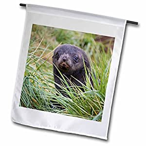 Danita Delimont - Seals - Antarctic Fur Seal, Hercules Bay, South Georgia, Antarctica-AN01 KSU0007 - Keren Su - 18 x 27 inch Garden Flag (fl_74940_2)