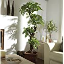 Chic Oriental Indoor / Outdoor Quality Faux Japanese Spiral Tree, Artificial Plants and Trees, Handmade Using Real Bark & Synthetic Leaves - Approx. 162cm Tall